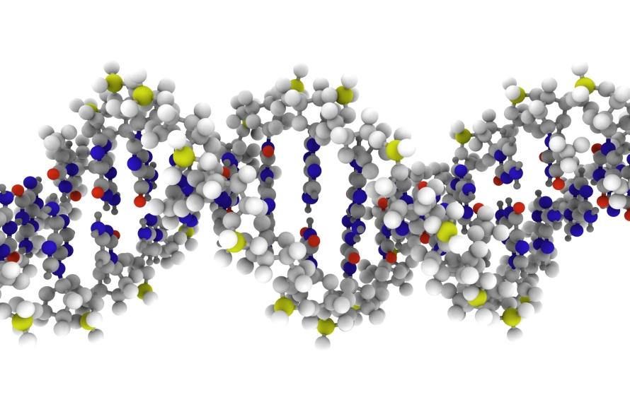 DNA molekyl